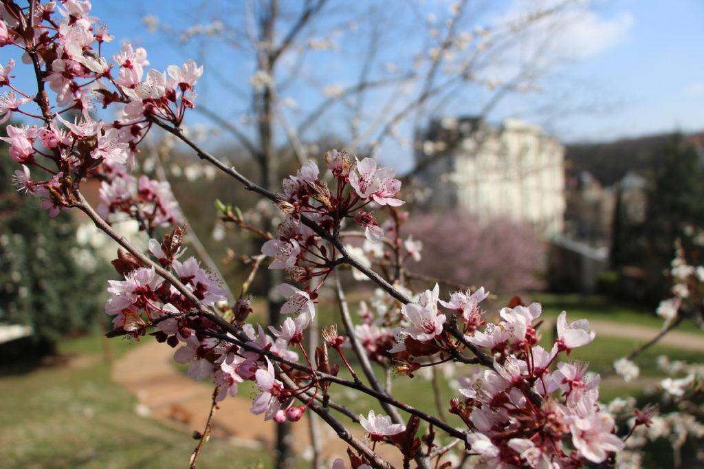 châtel-guyon printemps parc