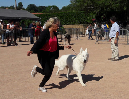 Plus de 1200 chiens attendus à la 27ème Exposition Canine !