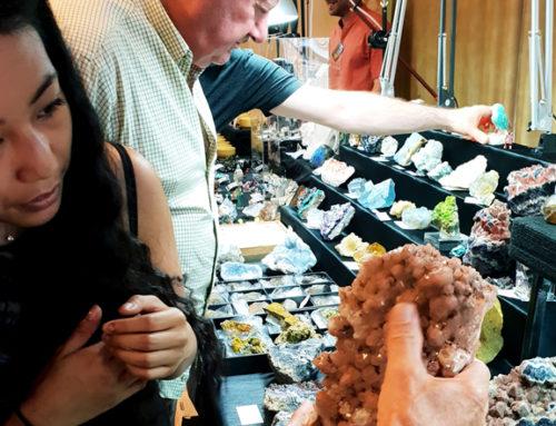 La paléontologie et les trésors fossiles des déserts au cœur du 55ème salon Géologix