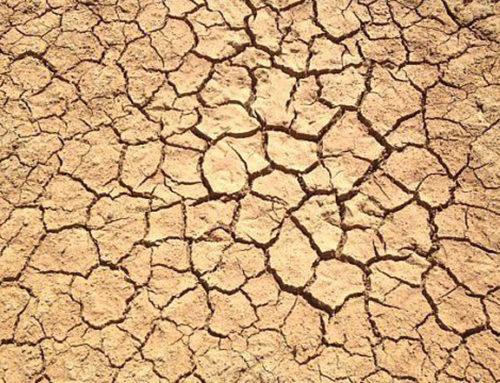 Sécheresse 2019 : reconnaissance de l'état de catastrophe naturelle
