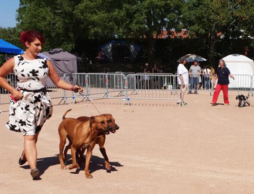 Plus de 1 200 chiens de toutes races attendus à l'exposition canine pour la 28ème édition !