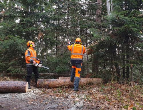 La Ville et l'ONF lancent des travaux dans la forêt communale !