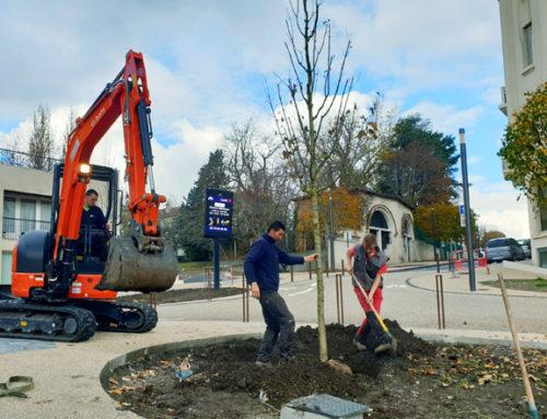 Travaux du cœur de ville : près de 50 nouveaux arbres plantés !